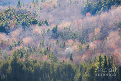 Photograph - Misty April Hillside by Alan L Graham