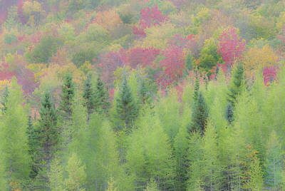 Photograph - Misty Autumn Colors by Alan L Graham