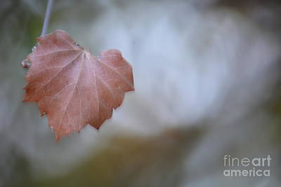 Photograph - Misty Autumn Leaf by Maria Urso