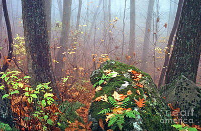 Misty Autumn Woodland Art Print by Thomas R Fletcher