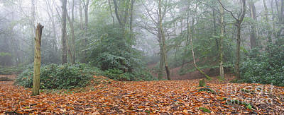 Photograph - Misty Beech Woodland by Warren Photographic