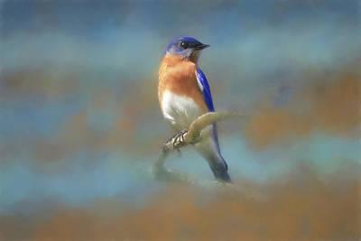 Photograph - Misty Blue by Donna Kennedy