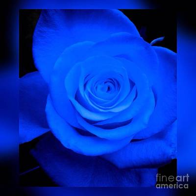Photograph - Misty Blue Rose by Joan-Violet Stretch
