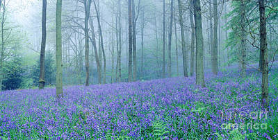 Photograph - Misty Bluebell Woods by Warren Photographic