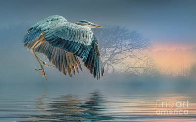 Photograph - Misty Dawn Heron by Brian Tarr