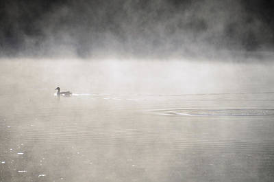 Photograph - Misty Duck by Charles Bacon Jr