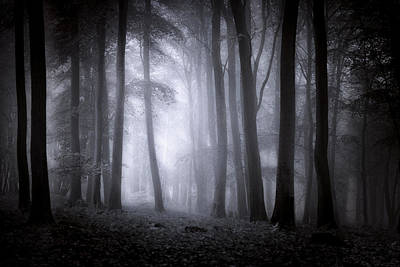Kent Falls Photograph - Misty Forest by Ian Hufton