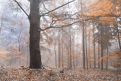 Photograph - Misty Forest  by Jenny Rainbow
