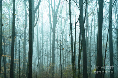 Misty Forest Art Print by John Greim