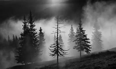 Misty Forest Art Print by Julien Oncete