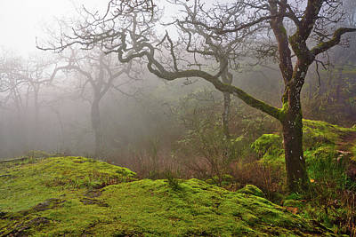 Photograph - Misty Forest by Keith Boone