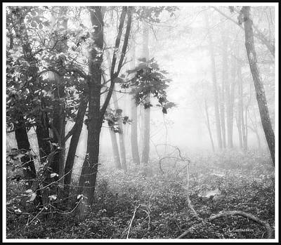 Photograph - Misty Forest Morning by A Gurmankin