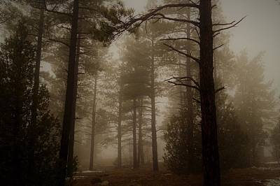 Photograph - Misty Forest Morning by Broderick Delaney