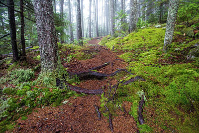 Photograph - Misty Forest Trail by Chris Whiton