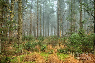 Photograph - Misty Forest With Sunshine by Patricia Hofmeester