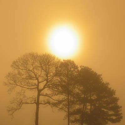 Photograph - Misty Golden Surise by Greg Collins