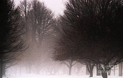 Bare Trees Digital Art - Misty by Linda Shafer