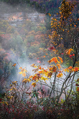 Photograph - Misty Maple by Diana Boyd