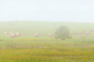 Photograph - Misty Meadow by Ben Thompson
