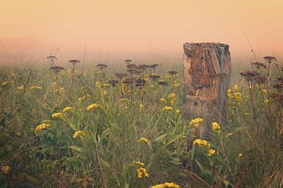 Field Photograph - Misty Meadow by Garvin Hunter