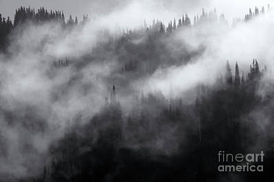 Photograph - Misty by Mike Dawson