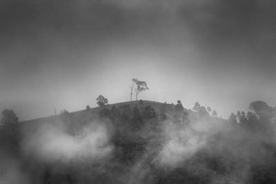 Metal Tree Photograph - Misty Moods by Az Jackson