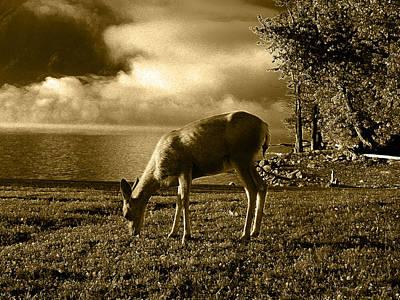 Digital Art - Misty Morn 2 by Stuart Turnbull
