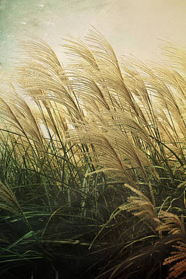 Photograph - Misty Morning Grass by Shawna Rowe