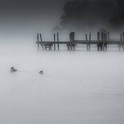 Photograph - Misty Morning by Jim Bosch