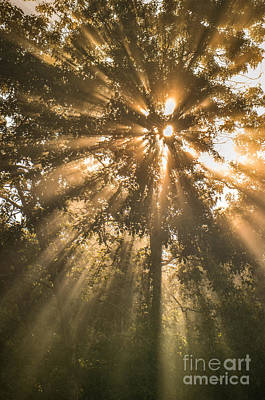 Photograph - Misty Morning Light by Amy Porter