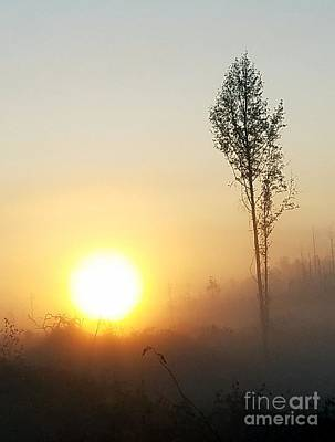 Photograph - Misty Morning by Maria Urso