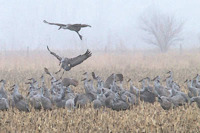 Painting - Misty Morning Nebraska Landing by Dennis Buckman