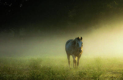 Photograph - Misty Morning by Pam Kaster