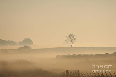 Misty Morning Pasture Print by Tammy Miller