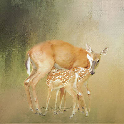 Nursing Deer Photograph - Misty Morning  by Sarina Cook