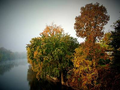 Misty Morning Shoreline Trees Art Print by Rory Cubel