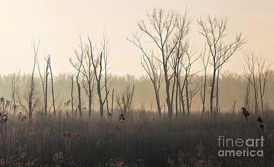 Photograph - Misty Morning Silhouettes by Elizabeth Winter
