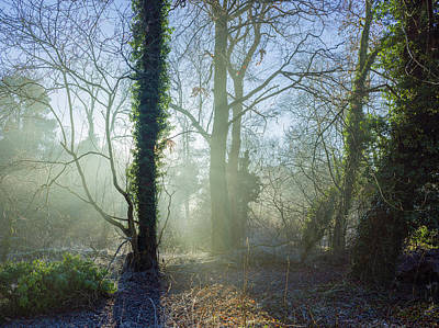 Photograph - Misty Morning by Stewart Marsden