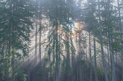 Photograph - Misty Morning Summer Sun by Tikvah's Hope