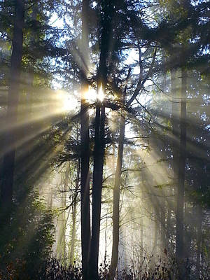 Sun Rays Photograph - Misty Morning Sunrise Colorful by Crista Forest