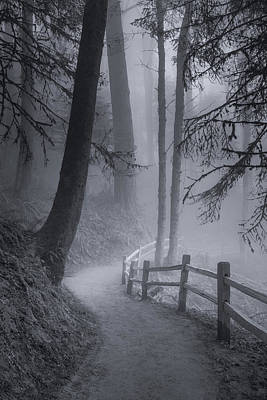 Photograph - Misty Morning Trail by Don Schwartz