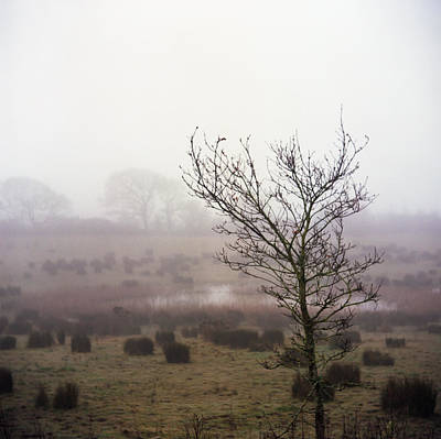 Photograph - Misty Morning Tree by Will Gudgeon