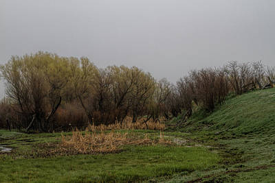 Photograph - Misty Morning Wetland by Alana Thrower