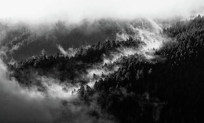 Photograph - Misty Mountain Pines by Michael Hope