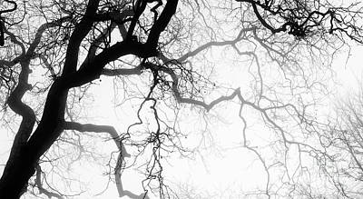 Photograph - Misty Oak by Tim Gainey