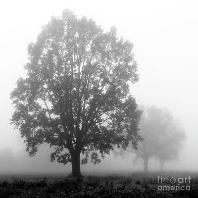 Photograph - Misty Oaks by Jaroslaw Suchozebrski