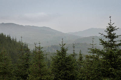 Boar Photograph - Misty Pine Forests by Chris Dale