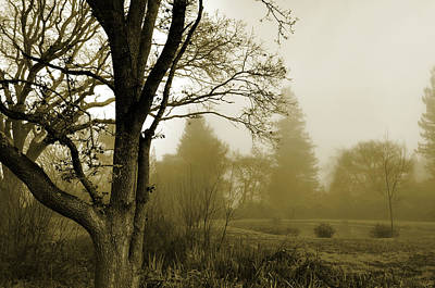 Photograph - Misty Pond  by Spencer Hughes