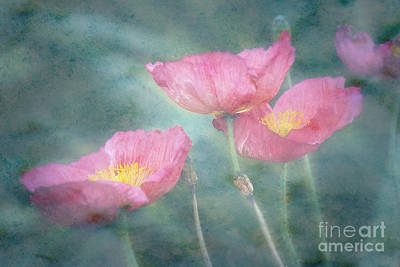 Photograph - Misty Poppies by Jim And Emily Bush