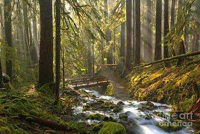 Photograph - Misty Rainforest Afternoon by Adam Jewell